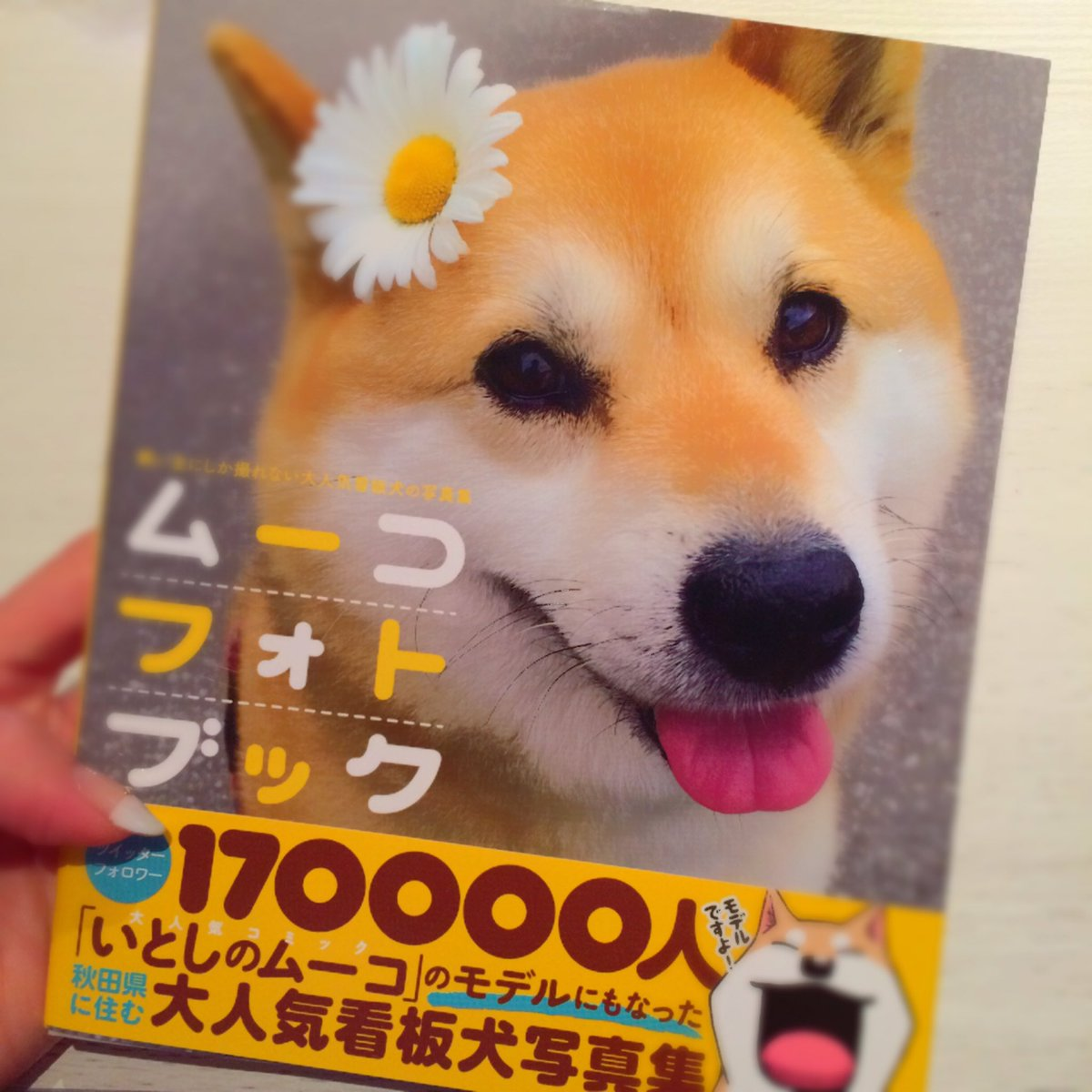 ずっと楽しみにしていたムーコのフォトブックが届きました♡キューーーン♡可愛すぎる...!!みてるだけて幸せになる♡#ムー