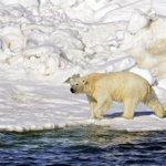 Alaska calls for Supreme Court to weigh in on polar bear habitat