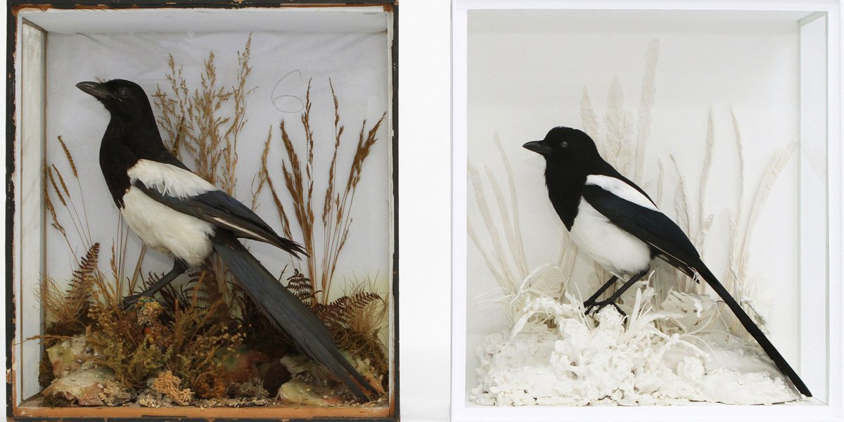 Join @TaxidermyLondon for a family talk on Saturday 26 November https://t.co/nI9D9JOnAL https://t.co/cE1NpmU4Yg