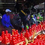 Training for 1,000 traders launched