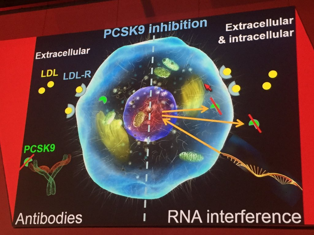 Inhibition PCSK9 synthesis by RNA interference #AHA16 https://t.co/TQ43ewcbxw
