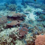 RM1.5mil invested in marine conservation project