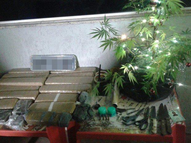 Pé de maconha enfeitado de árvore de Natal é apreendido em Uberlândia https://t.co/yDIJJsxofu #G1