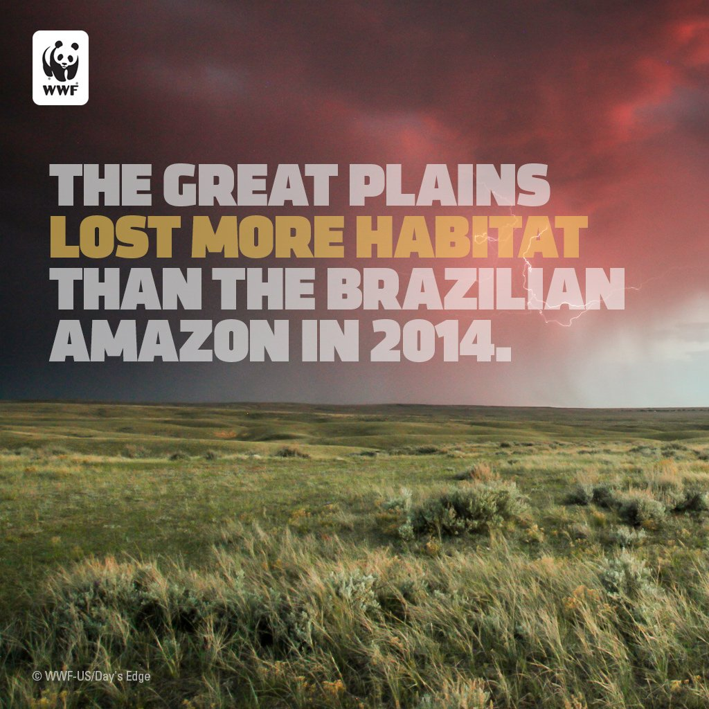 America's Great Plains Lost More Habitat in 2014 than the Brazilian Amazon. https://t.co/Y0DeJItQco https://t.co/y5L8dphzu9