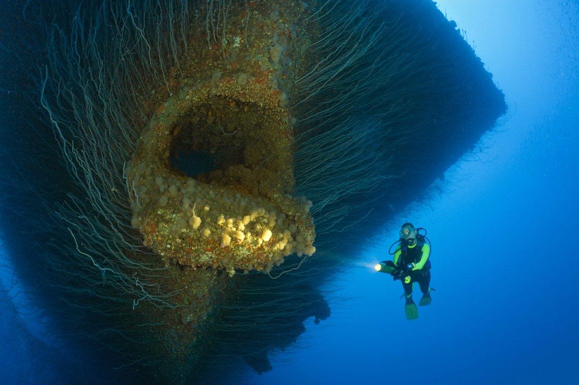 ビキニ環礁に沈む空母サラトガの現在の姿  #艦これ深海棲艦化してやがる・・・