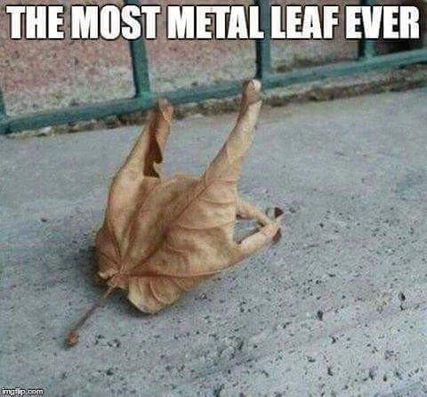 """As autumn is here, let's have a seasonal """"rock"""" pic :) @WyattVW https://t.co/uEUWDPnM6j"""