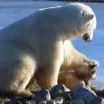Touching video: Hearts melt when polar bear pets a dog