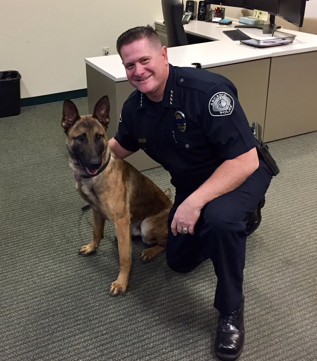 Chief Guthrie welcomes #K9 Officer Zoli for his first Patrol shift! #APDCA #GoldCoastK9 https://t.co/hmMDPzZU1w