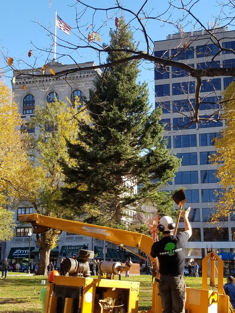Boston Common Christmas Tree being lowered into place @universalhub https://t.co/PhlaqjFTFp