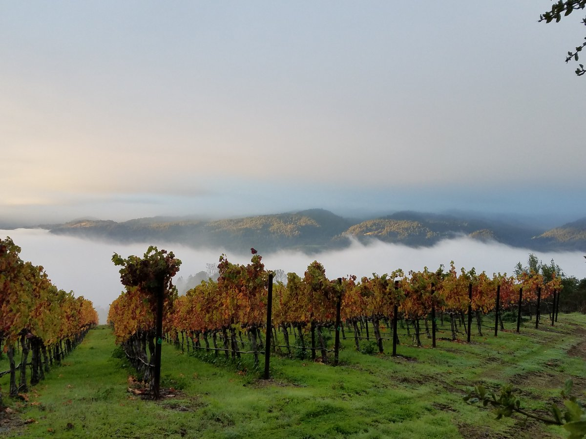 A beautiful Fall photo of our Dancing Bear Ranch. Nice view and great wines! https://t.co/rHG4Ol7Jvp https://t.co/fmNGTNFaPR