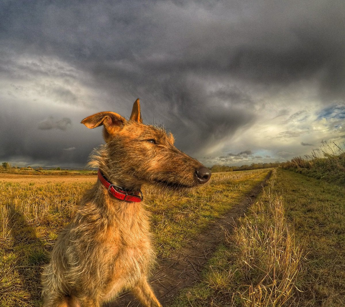 A brisk afternoon walk with a hint of sunshine.. not a bad thing at all