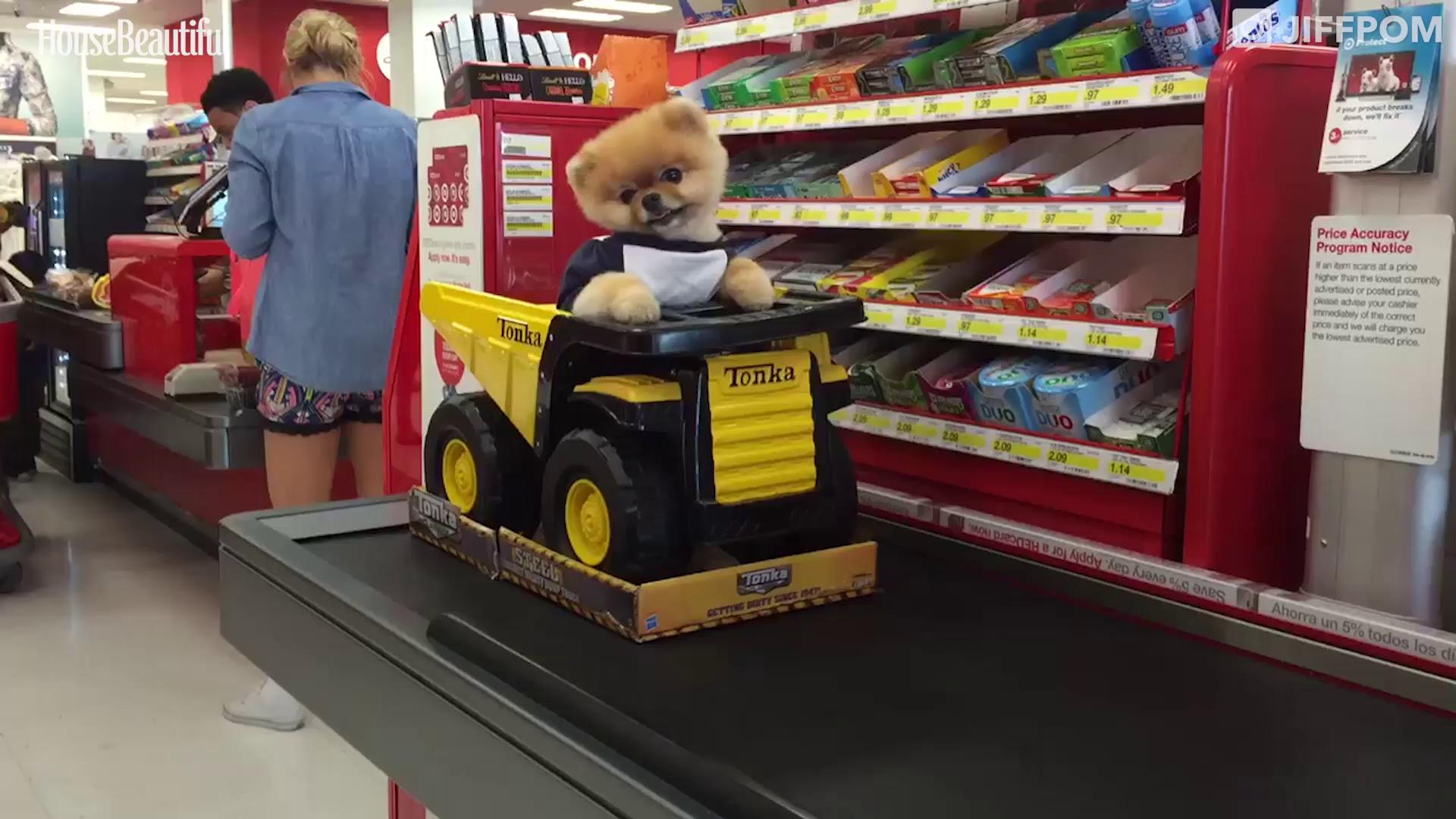 Internet, meet Jiff — the cutest dog in the world. https://t.co/yefkJxP8dI