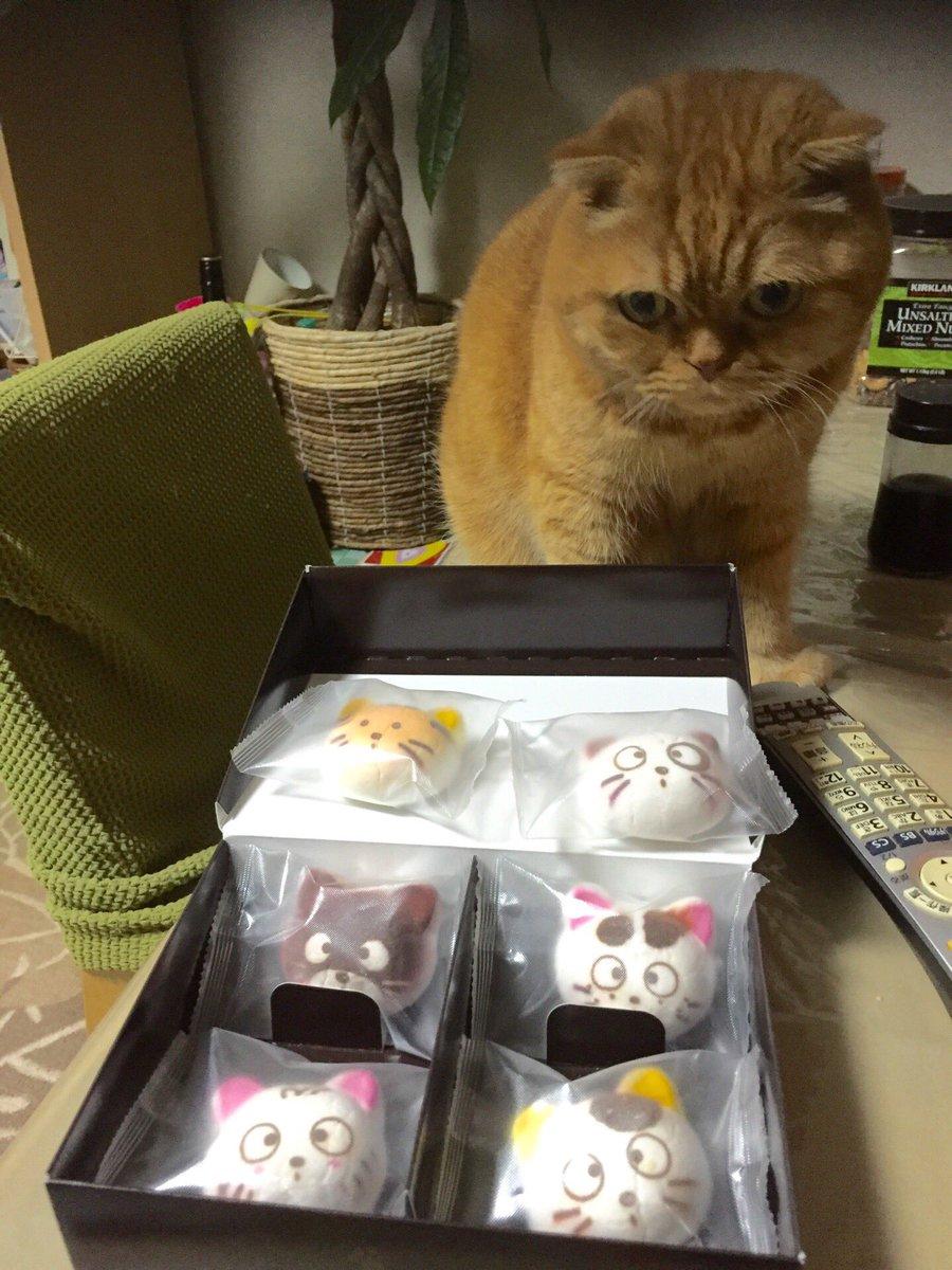 3.猫のマシュマロフェリシモ猫部から発売されている猫のマシュマロ!猫好きの私は大興奮の差し入れでした!我が家のニャンコ