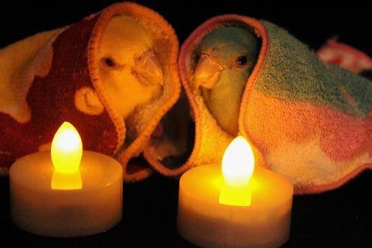 Holy Cuteness @holycutenesss: RT @cerealandforks: when ur candles are fake but it's ok bc ur love keeps you warm https://t.co/fft8VowsSN