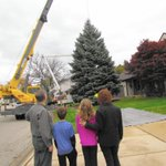 Aurora's holiday tree toppled in high winds