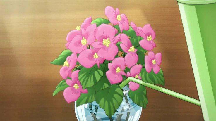 ココナが保健室で水をやった花はベゴニアです。花言葉は「幸せな日々」 #フリップフラッパーズ