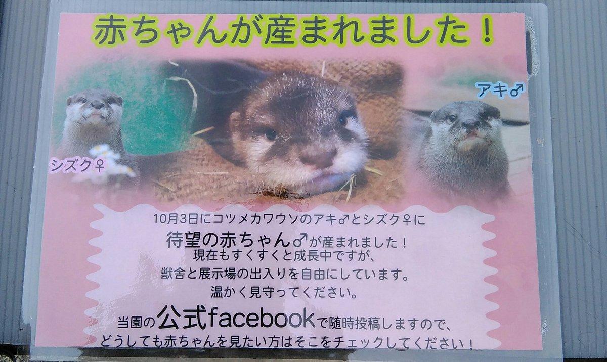 智光山公園こども動物園(12/4)あきくん、しずくちゃん、ちびウソちゃんに会いに行きました。会えるかな?