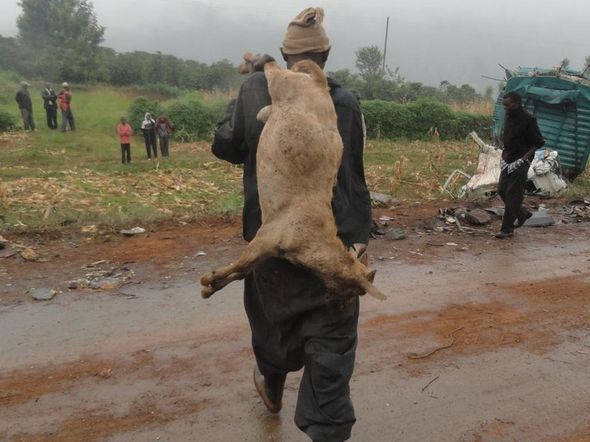 Seven hospitalised after feasting on sheep's carcass