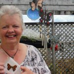 Hunt is on for native forest ringlet butterfly