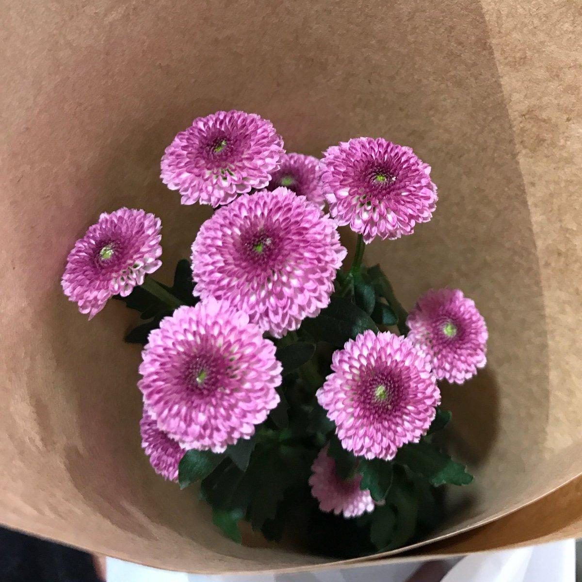 今日の『月曜日1本花を買おう』はこれ。キク科の『カリメロ』という花らしい。なんとなーく惹かれたので買ってみたー。