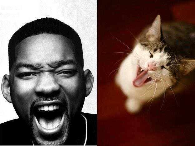 Сексимэн VS милый котик: кто круче — голосуем в комментариях!   #sexy #sexyman #cute #секси https://t.co/eCMl5qQ0bH