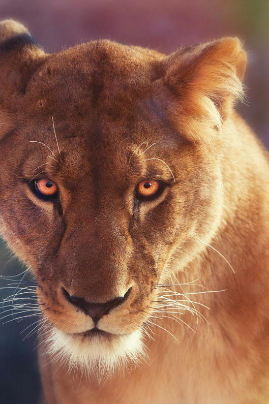 #wildlife: #wildlife
