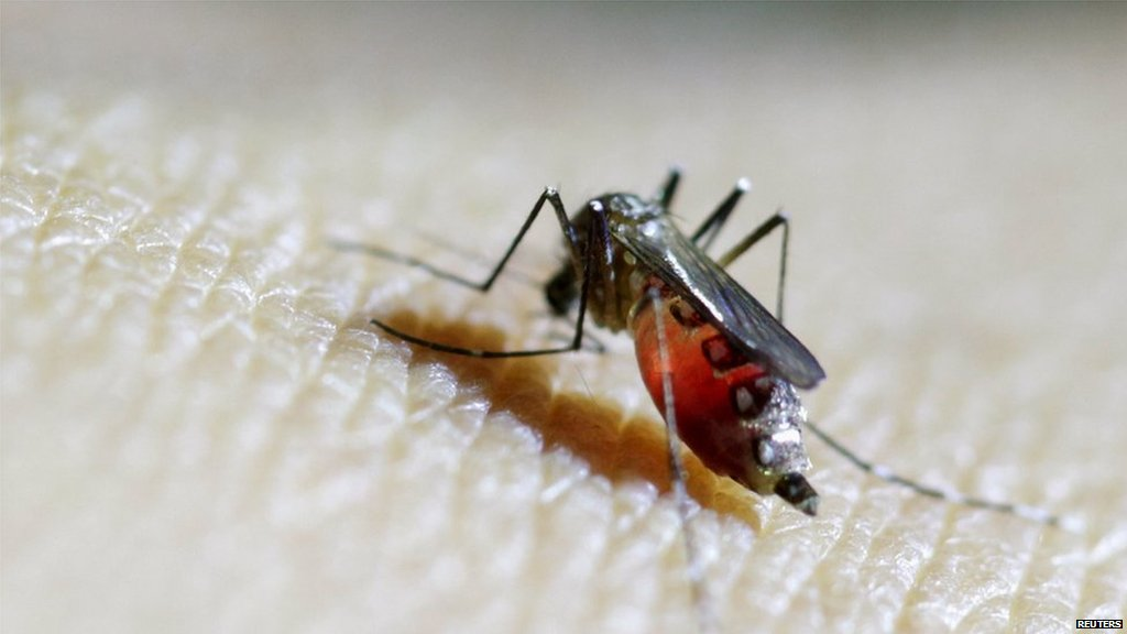 Texas reports first Zika case from local