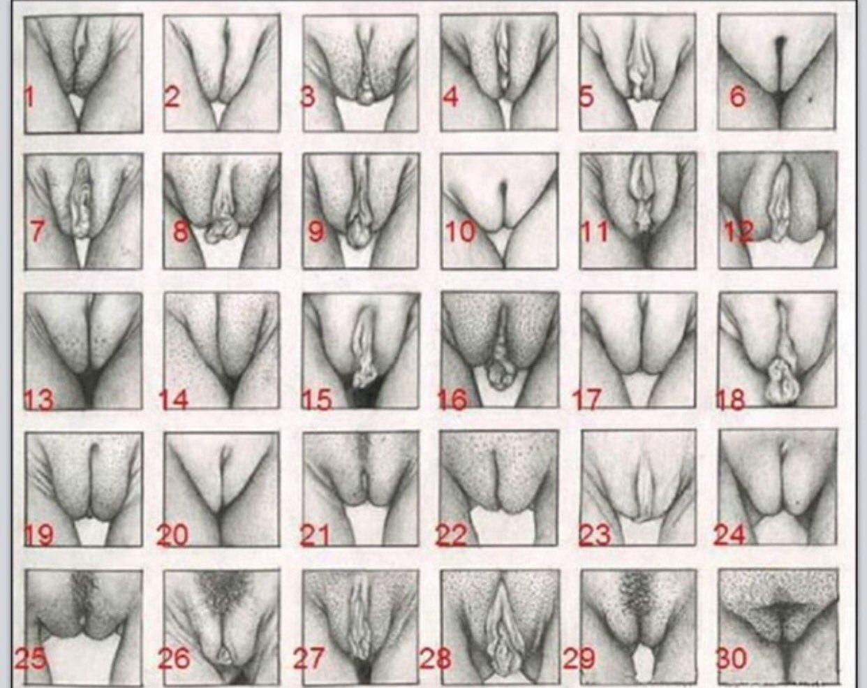 formi-vagini