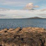 New plan to restrict fishing in Hauraki Gulf unveiled