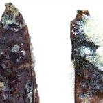 Rare Antarctic beetle find delights
