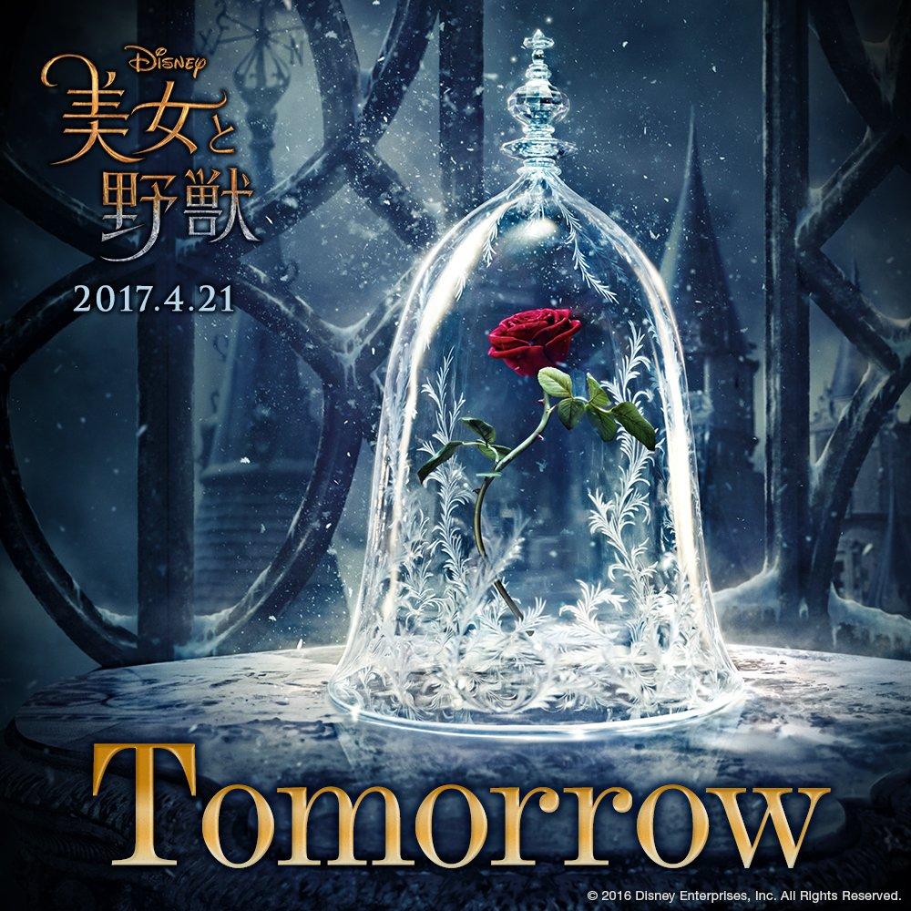 明日(12/1)、『#美女と野獣』で何かが起こる...🌹✨(´-`).。oO(ざわ...ざわ...)