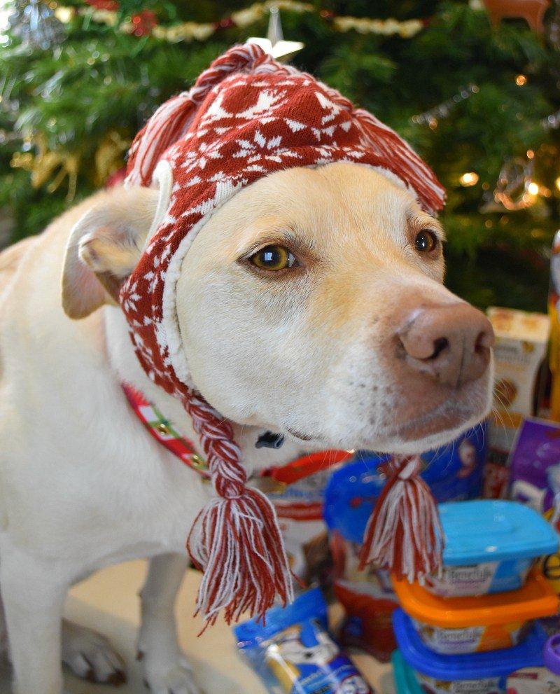 12 gift ideas your dog will love & BIG SAVINGS via @south2southwest! #Txt4Pet AD https://t.co/0y6cnLbtky https://t.co/H6K7Loha65