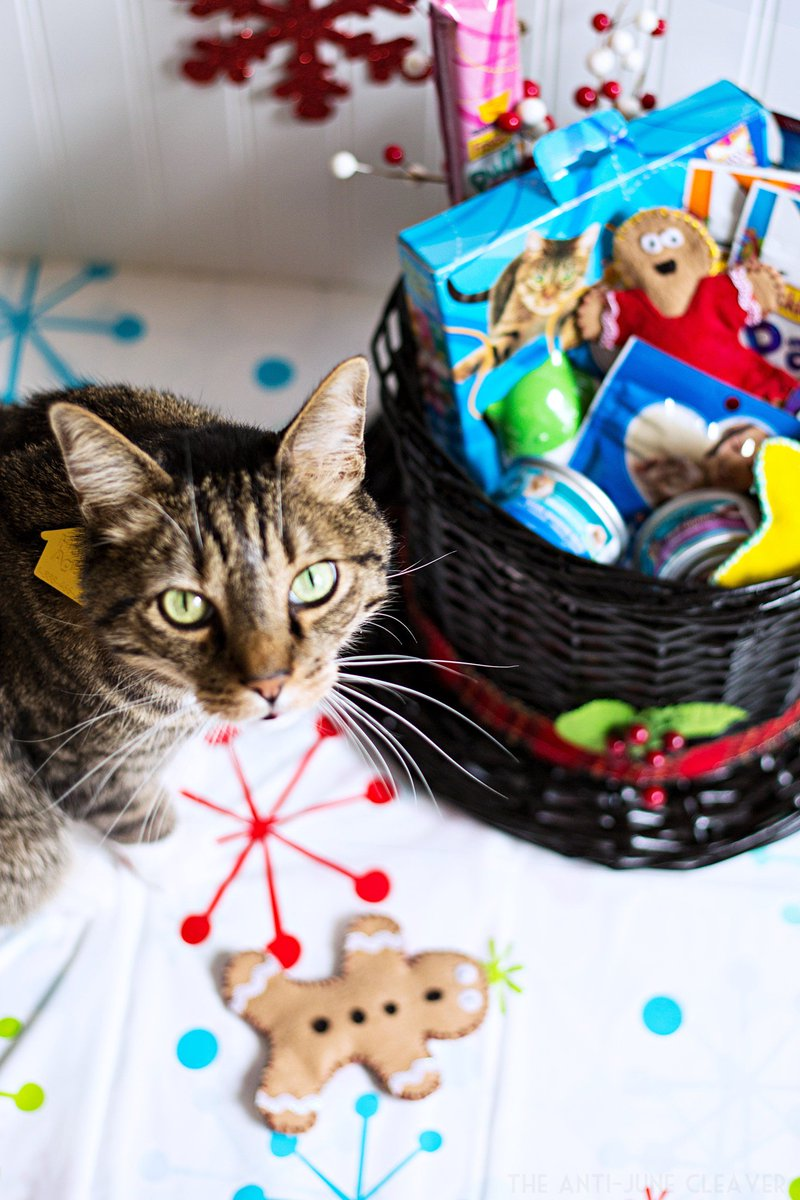 """For Me?"" Easy DIY Cat Gift Basket + SAVINGS from @AntiJuneCleaver! #Txt4Pet AD https://t.co/OfSaDVgtia https://t.co/qO9ur0tpp7"