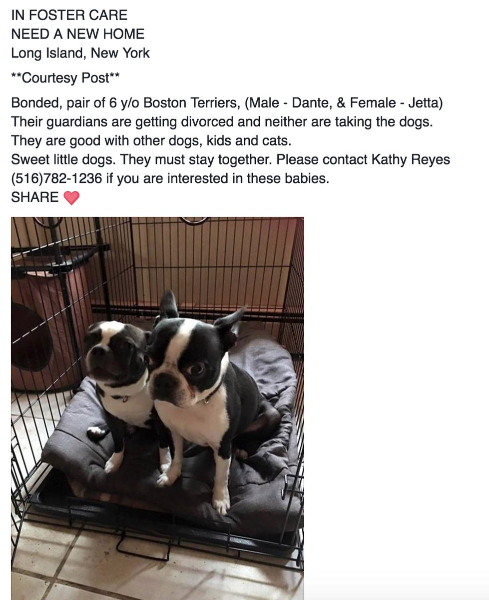 Please share. Really hoping to find these two an amazing home.  cc: @juliebenz @AnimalHaven https://t.co/1j2hGTxJw1