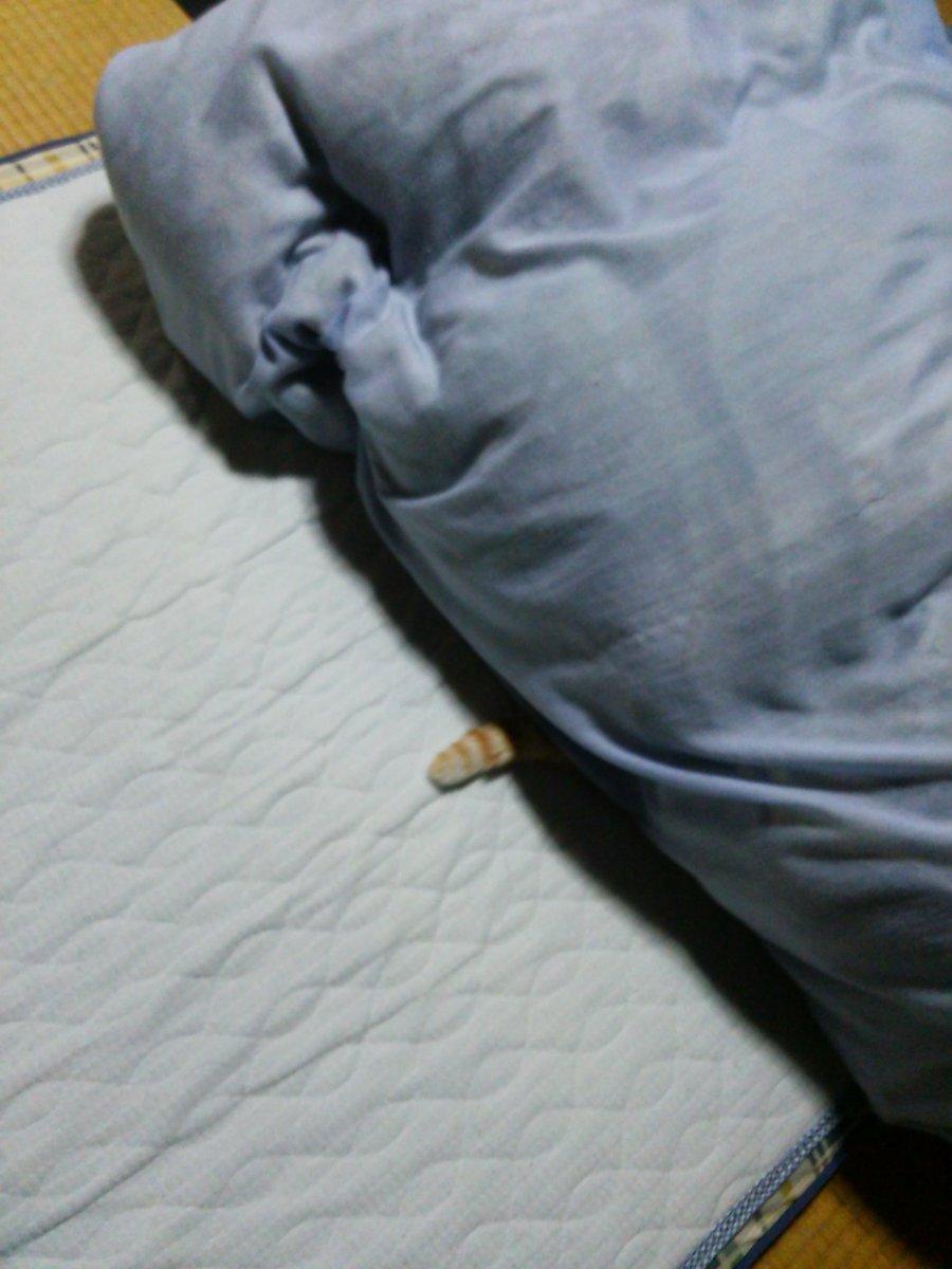 おはようございます。まだ寝てるニャル子を起こすのも可哀想ですが、布団あげなきゃなので。写真撮ってたら、睨まれてしまいまし