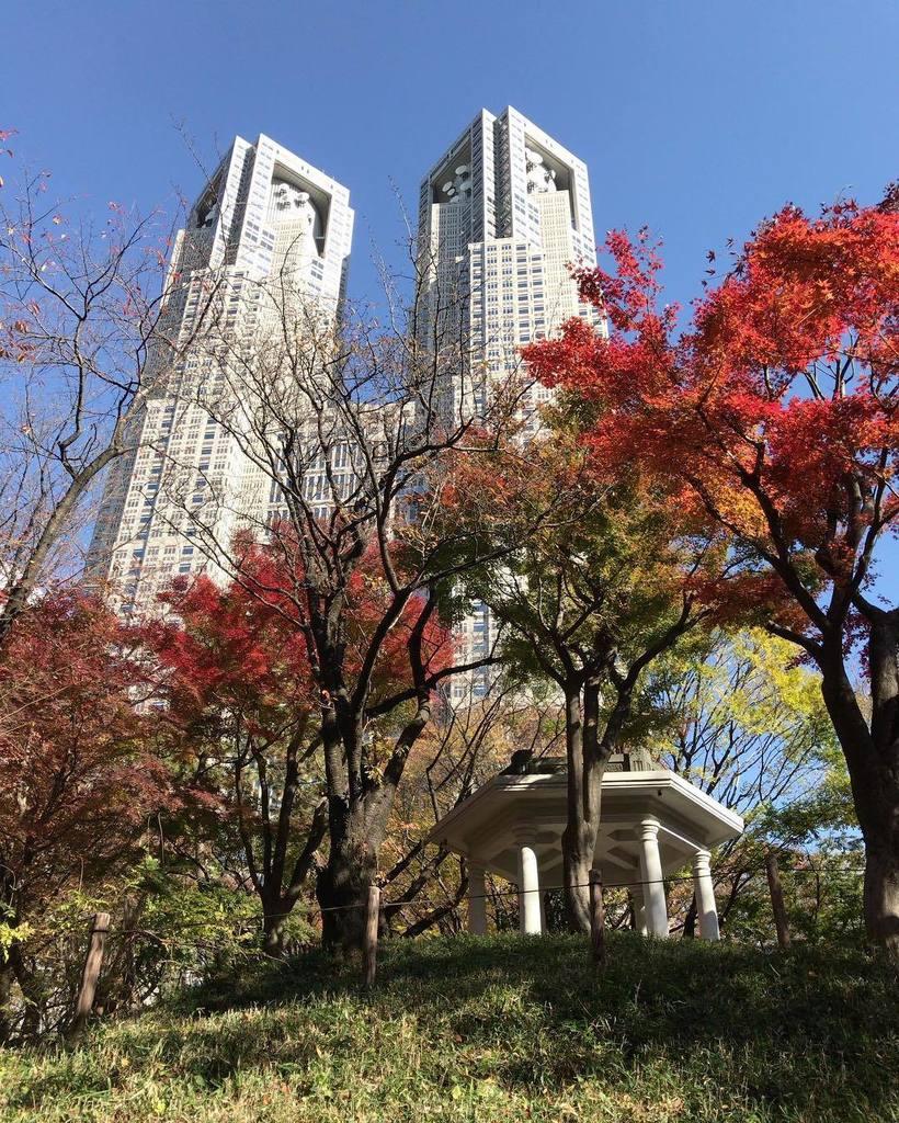正解は!新宿中央公園だったのです!都庁どーん!まさに都心っていう場所にこんな風景があったなんてね。新海誠監督の『言の葉の