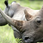 How AI Tech Is Used to Take Down Poachers