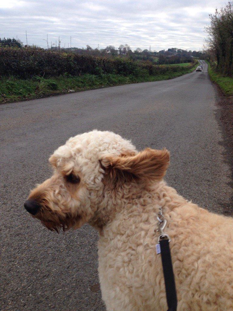 I hear a car!!! #walkingthedog https://t.co/19njTCMx6T