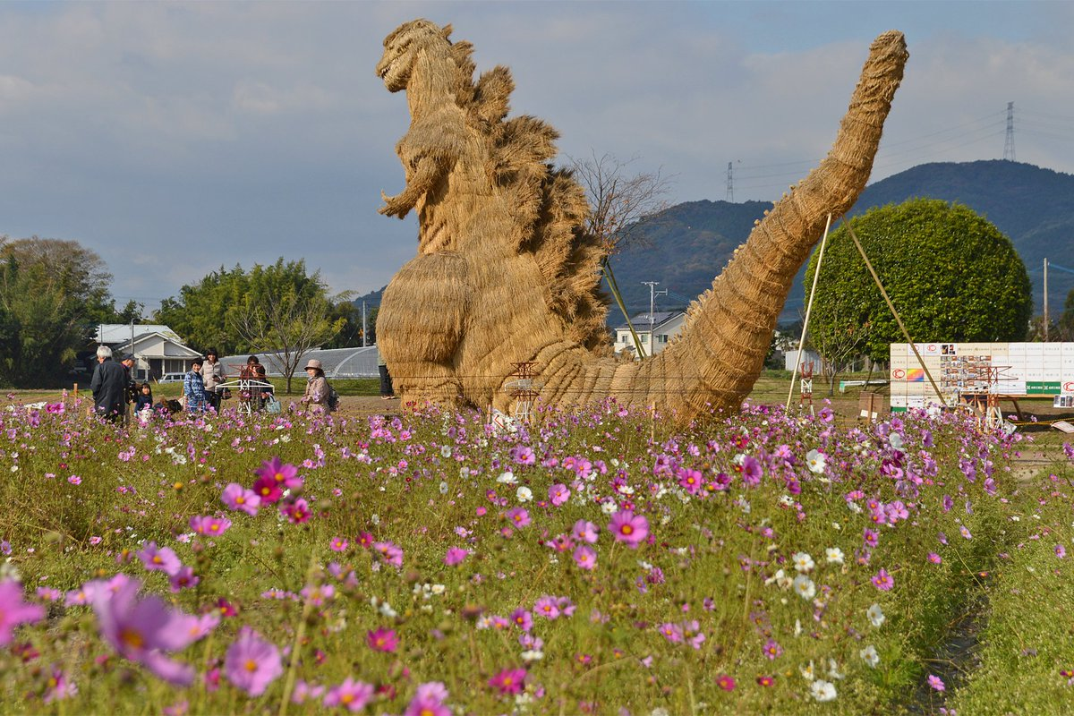ワラ製シン・ゴジラ像とコスモス(福岡県筑前町)。のどかな光景である。公開は12/4(日) まで。 https://t.co/ORlhVQ0F0u
