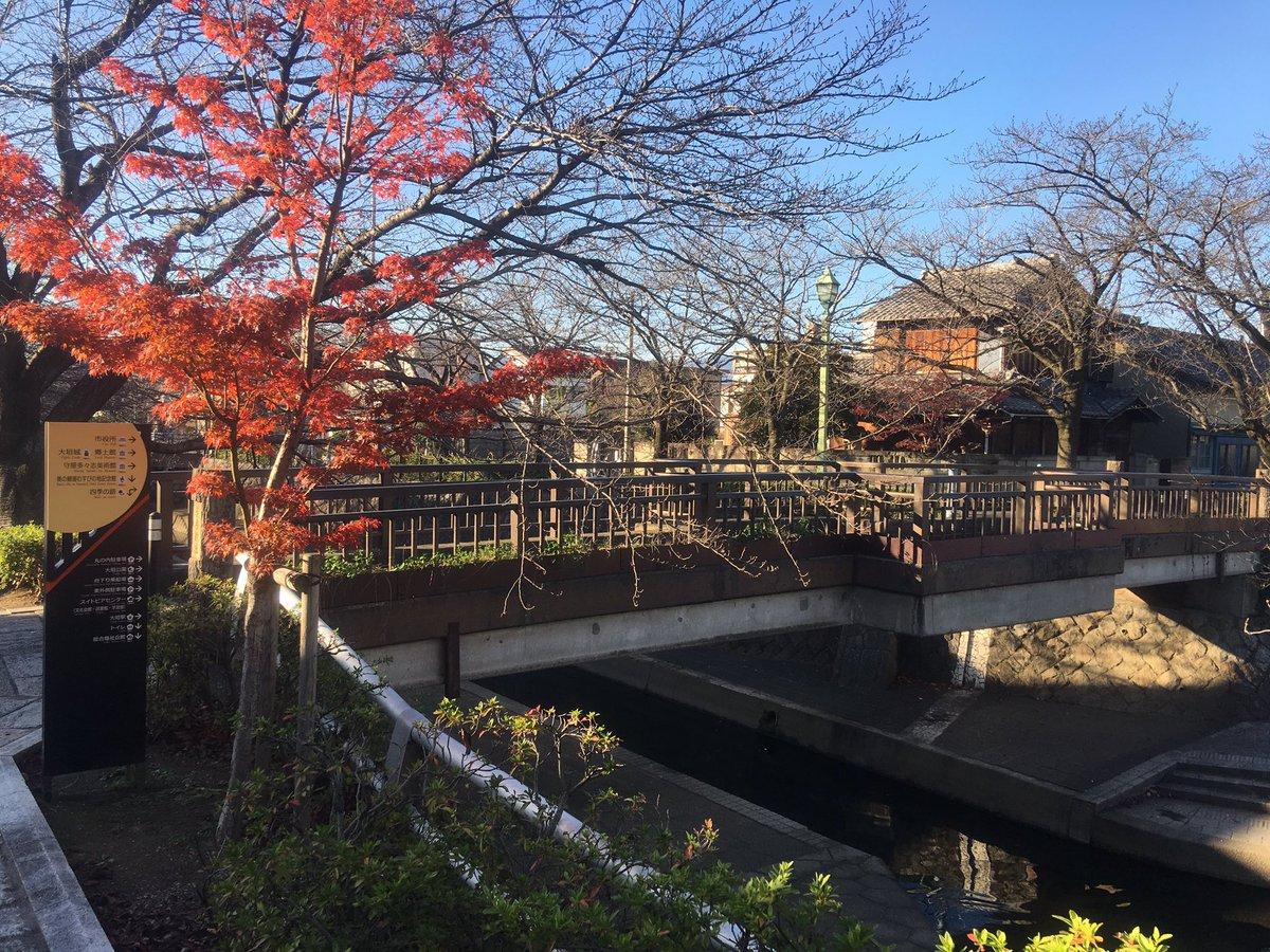 映画「聲の形」でメインに登場する美登鯉橋。鯉もたくさんいる。