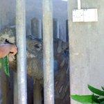 Critically endangered species: Fewer than 100 Sumatran rhinos left