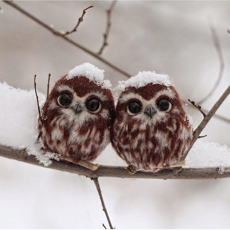 Two little owls in Russia https://t.co/0TXpXll95w