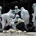 Avian influenza: increased control measures in Europe