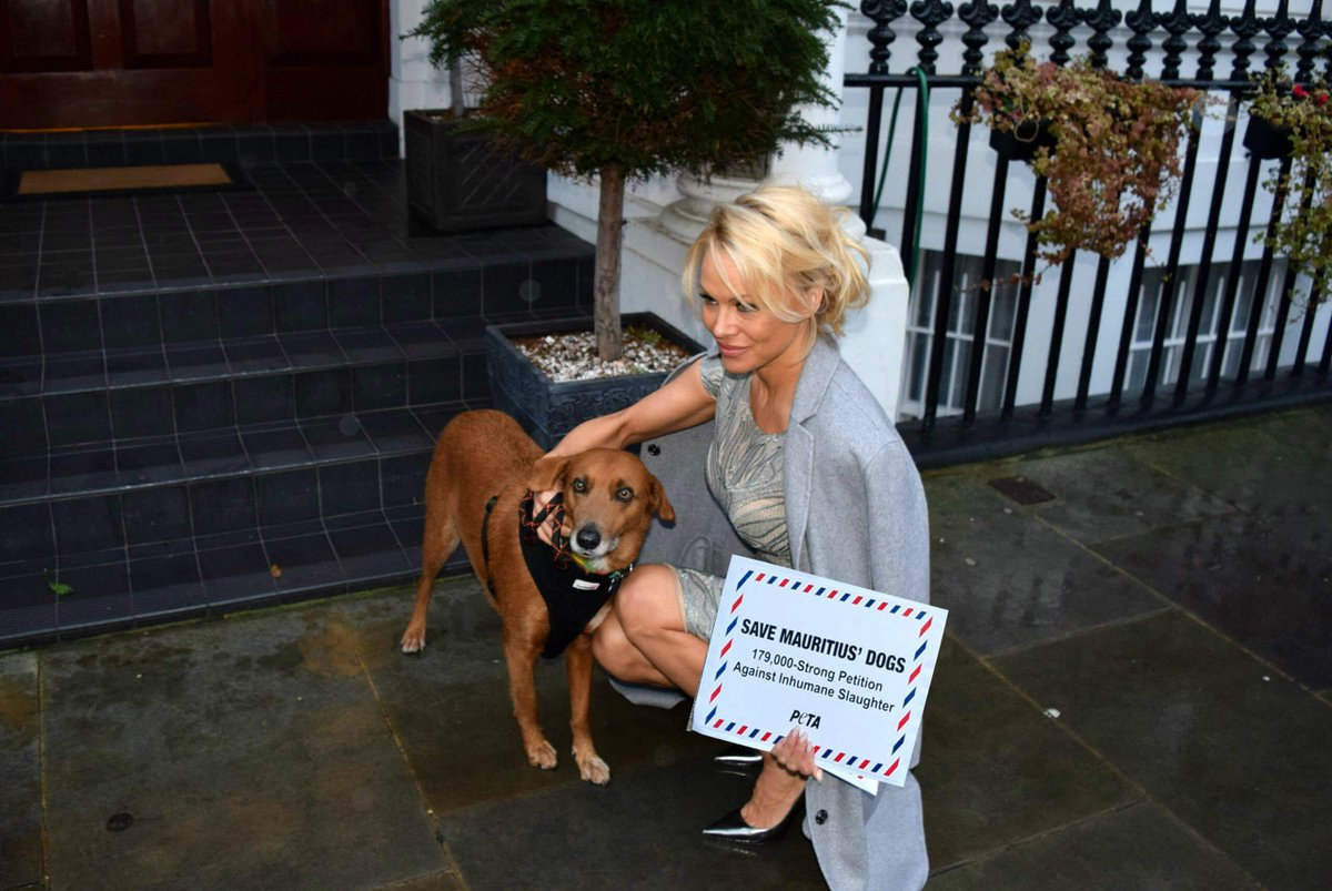 RT @peta: ICYMI: Pamela Anderson stands up to #Mauritius and urges them to STOP violently slaughtering stray dogs. https://t.co/PjTipXgCBl