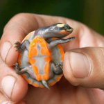 The Internet Decided To Photoshop This Cute Baby Turtle And It Is Crazy
