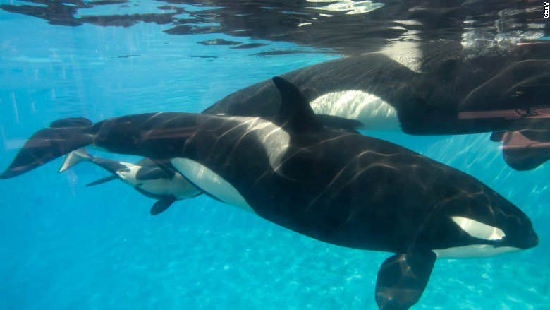 SeaWorld Entertainment cuts 320 jobs across all 12 theme parks due to falling attendance