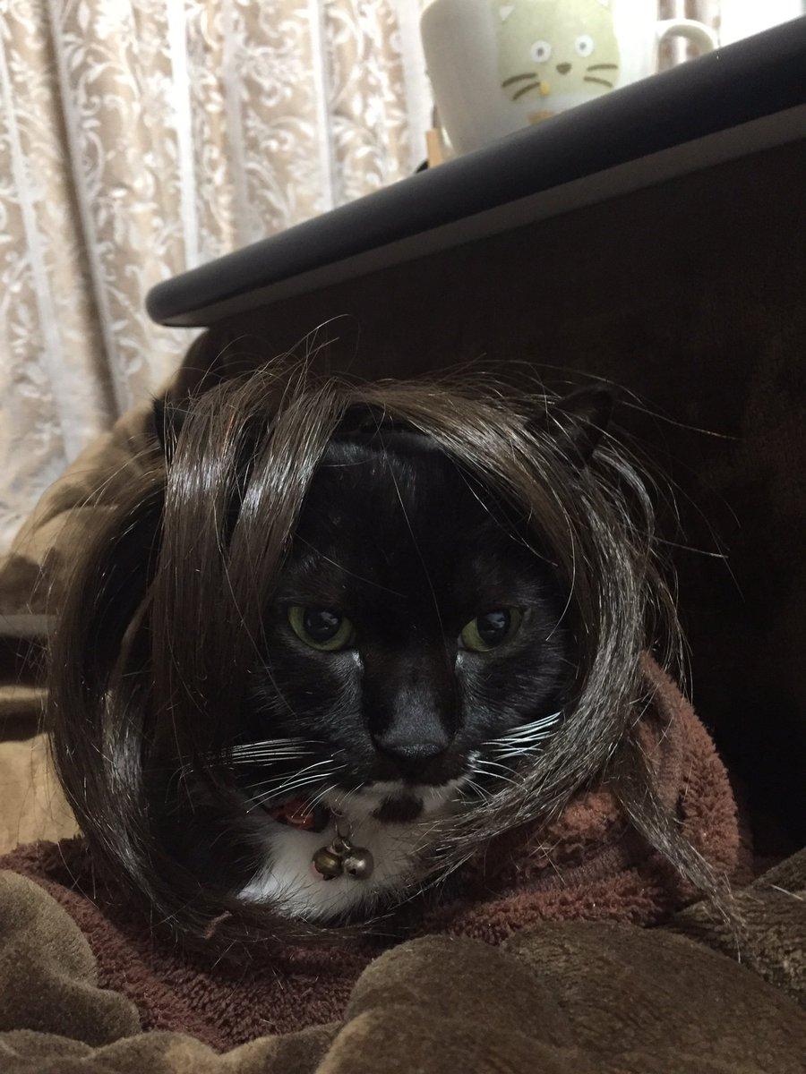 母のウイッグを被せたらギャル風髪型に!と思ったけど、「うしおととら」のとらに見えなくもない。