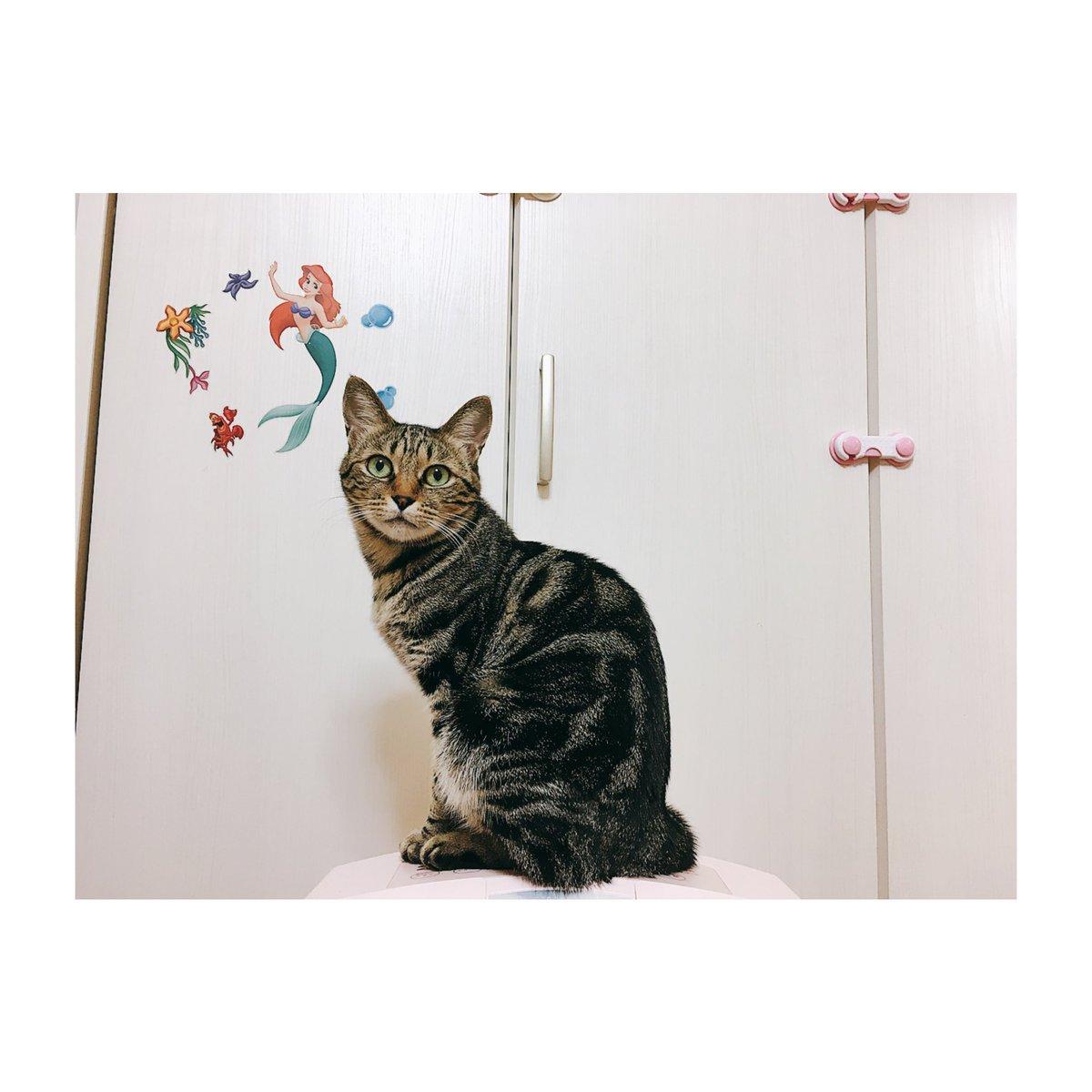 見よ。人よ。この美を。(☝ ⊙ਊ ⊙)☝#猫
