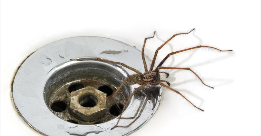 Wie kommen spinnen in die wohnung