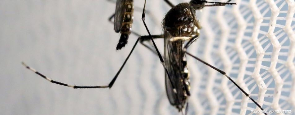 4 more Zika cases, likely homegrown, found in Texas